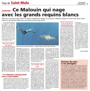 article requin